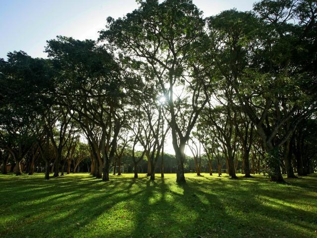 Árboles de Mandivira