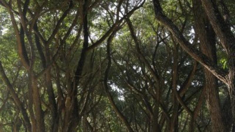 Reforestación de Mandivira